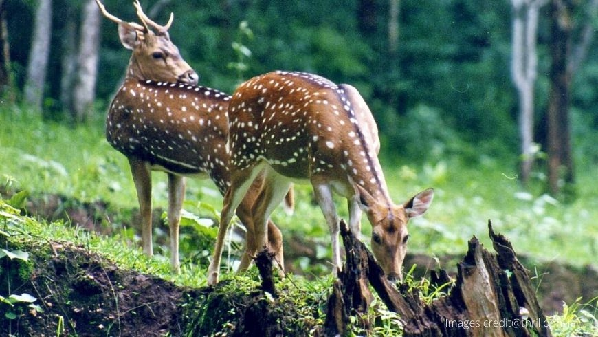 Manali-Wildlife-Sanctuary2