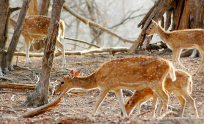 Mount Abu Wildlife Sanctuary
